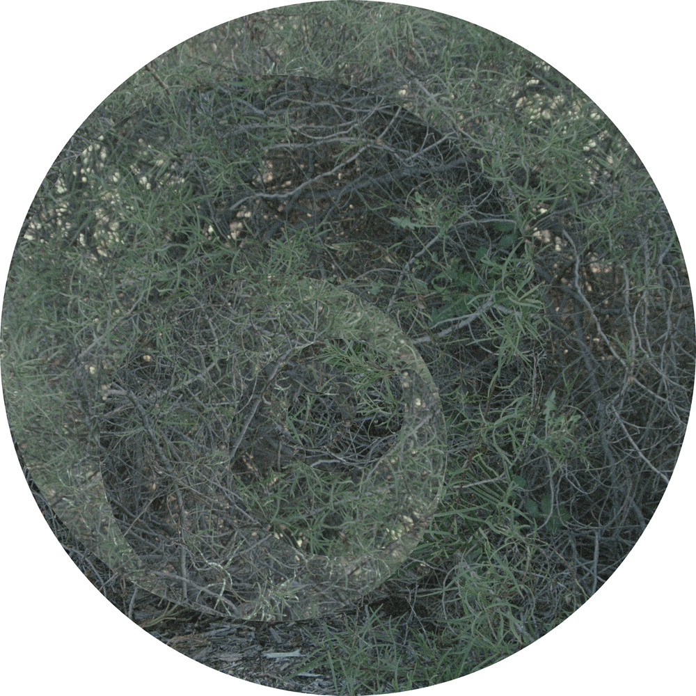 Untitled (something like pine #1)  2015 Chromogenic print collage on plywood 1100mm diameter Courtesy the artist, Dianne Tanzer Gallery and This is No Fantasy