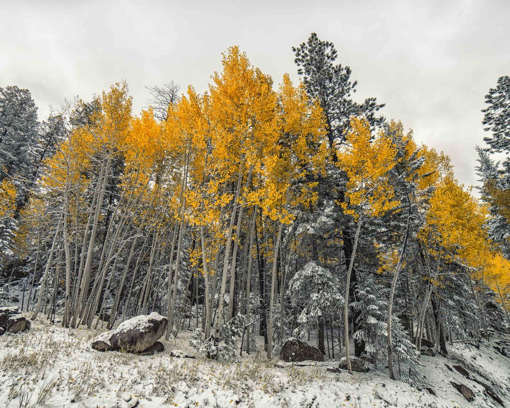 FALL SNOW -1.jpg