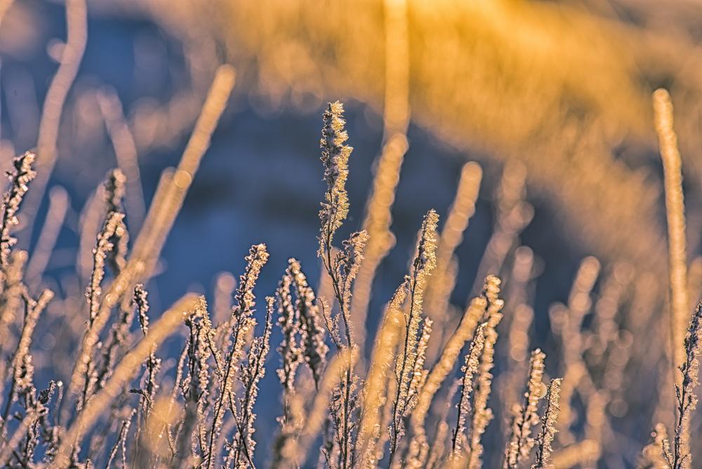 Frosty Grass-1.jpg