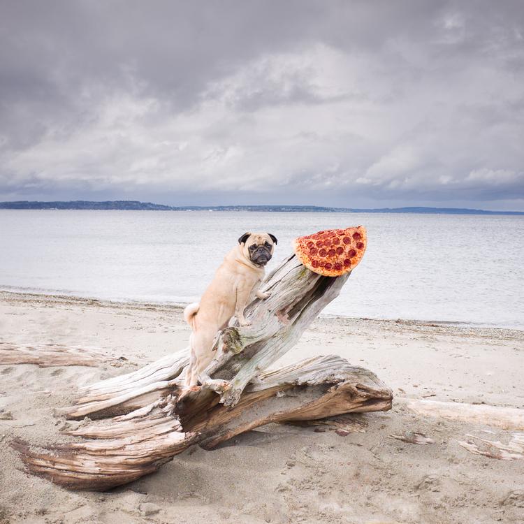 pizza in the wild by jonpaul douglass