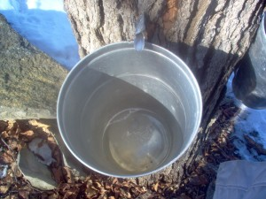 maple-bucket-300x225.jpg