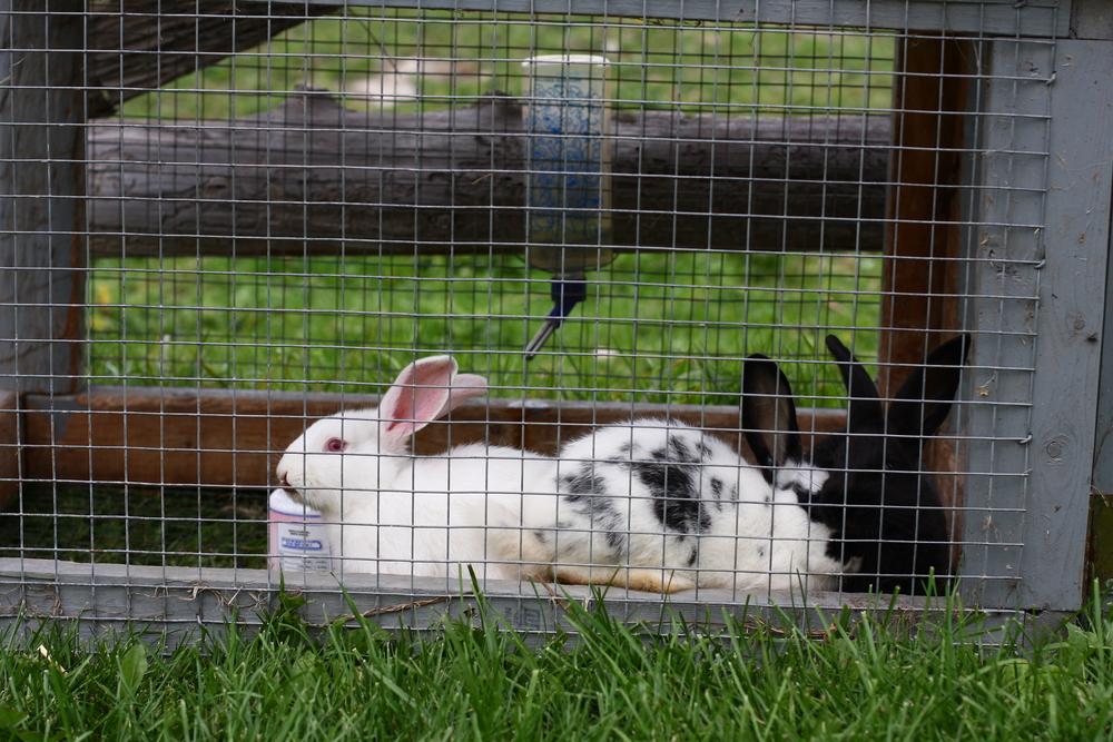 organic_farming_rabbits