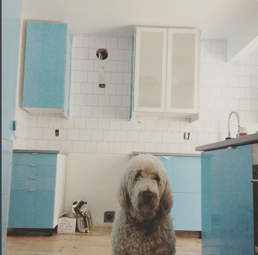 """Oli enjoying the new kitchen"""