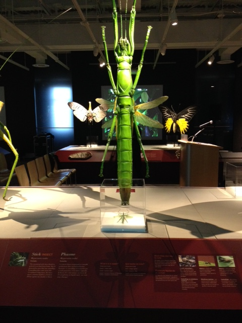 One of the beautiful bug sculptures on display