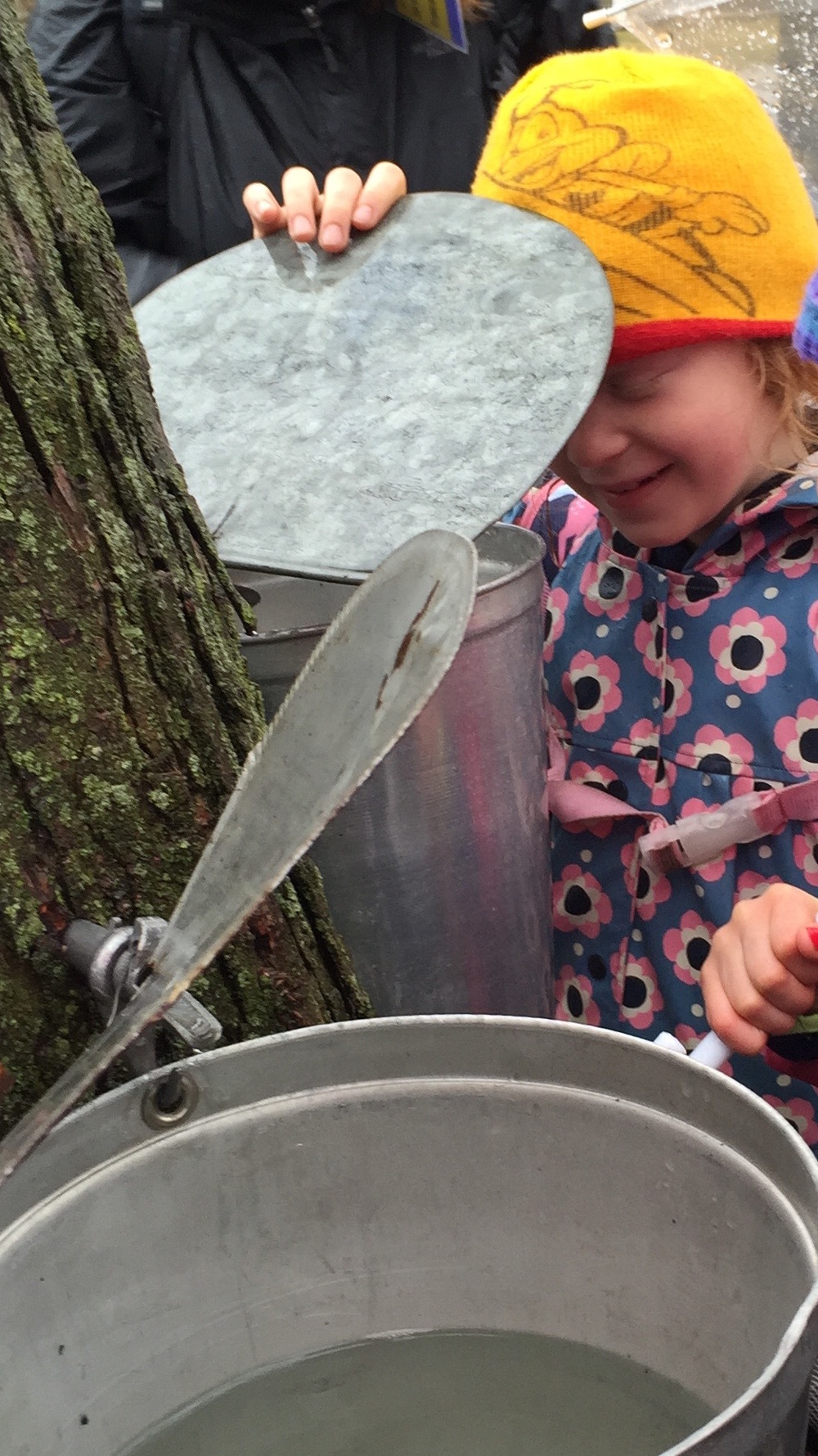 Maple Syrup Season