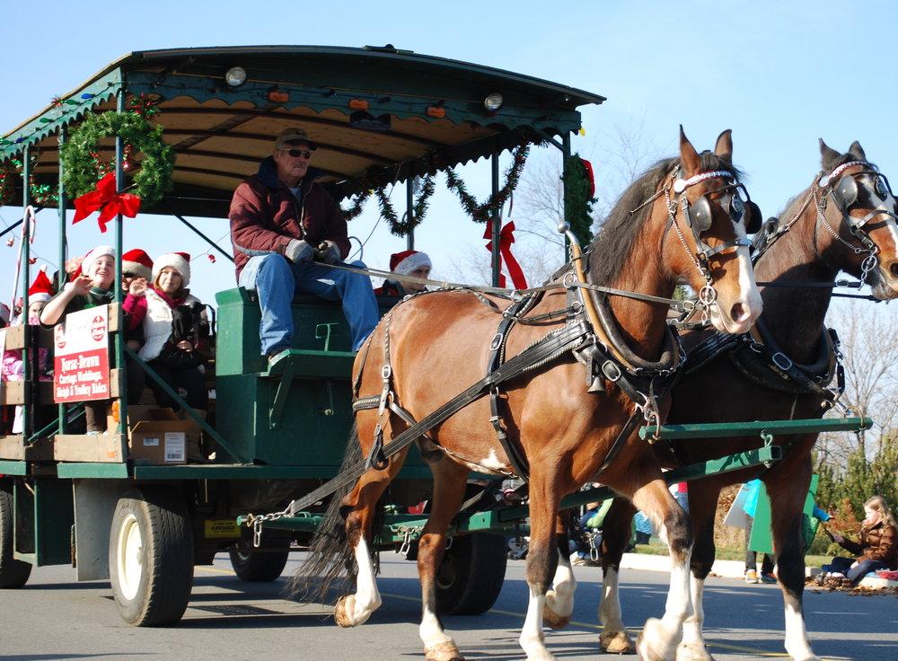 Horses at Santa Claus parade