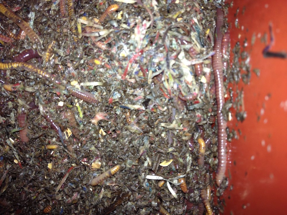 Worms working hard to break down waste; you can still see some of the original paper in here