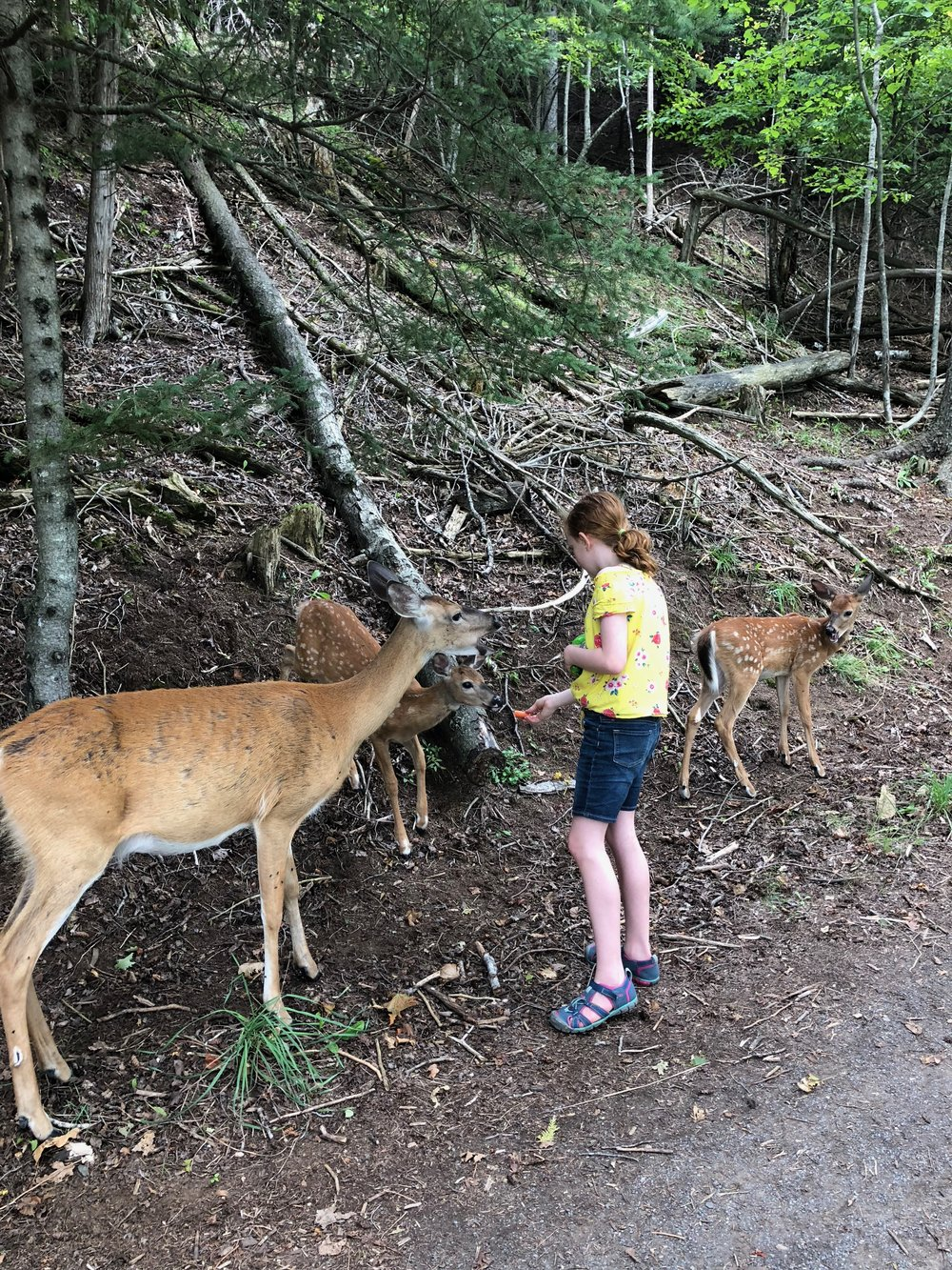 Feeding Deer at Parc Omega