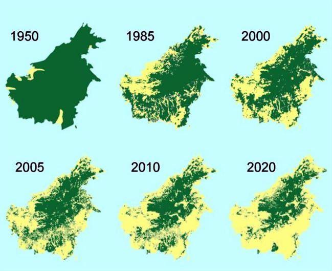 borneo-deforestation-map-_ueq3.jpg