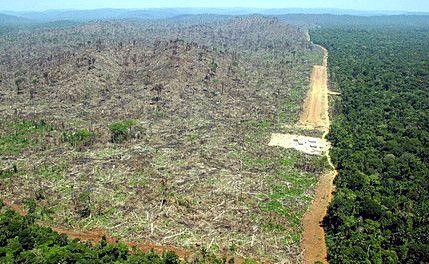 deforestation2-ae1dc.jpg
