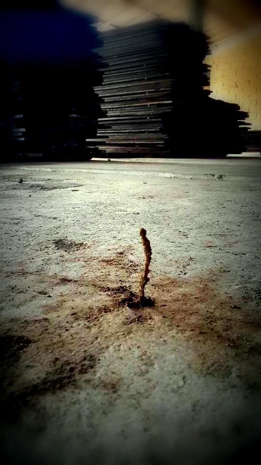 termite versus ironwood