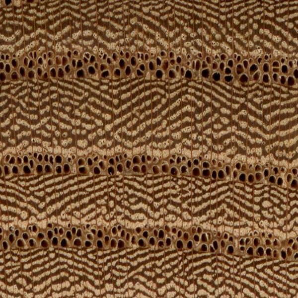 red elm end grain