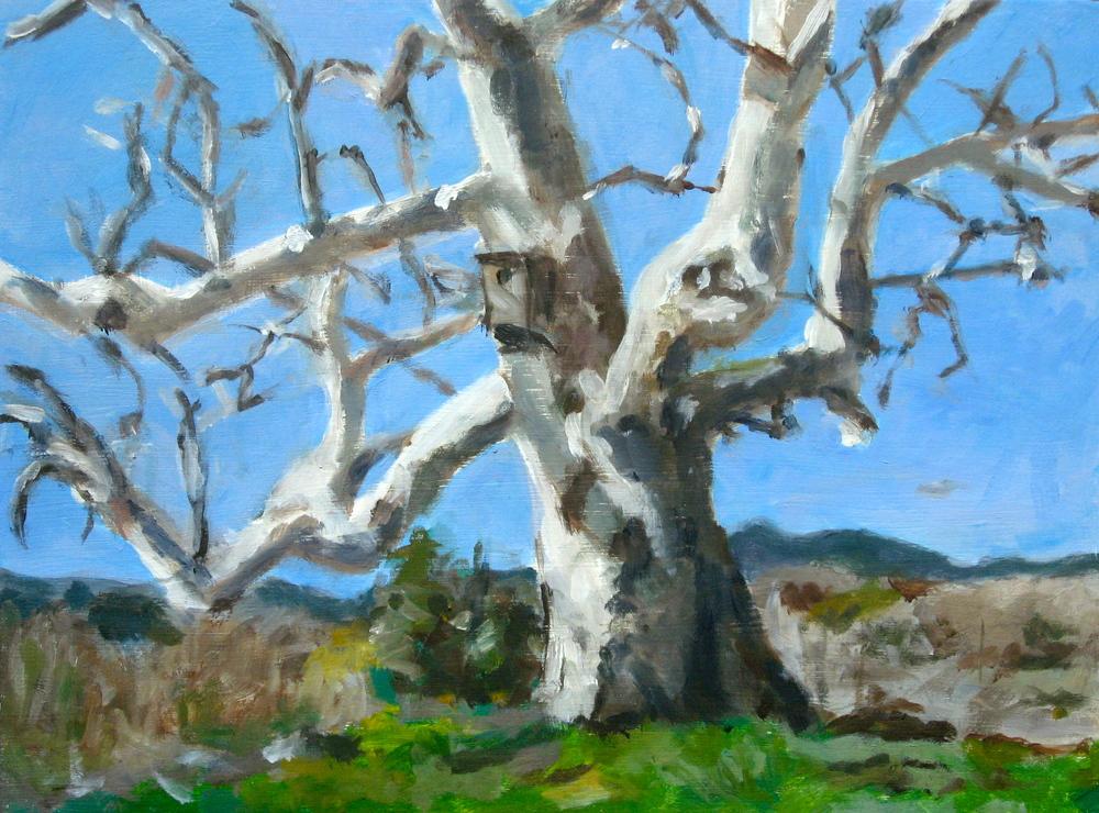 Santa Teresa Tree