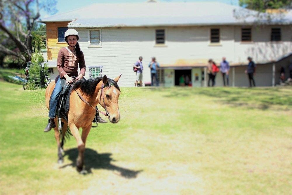 horseasha2 (2).jpg