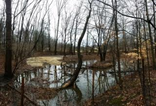 Vernal pool filling up after a storm