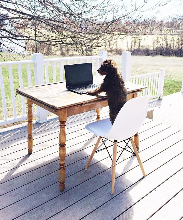 @taco.murphy is definitely a fan of our outdoor office ☀️ #lifeatweddingwire #lacasademurphy #tacomurphy . . . . . #theeverygirl #thatsdarling #darlingweekend #bedeeplyrooted #livethelittlethings #darlingmovement #thepursuitofjoyproject #morningslikethese #dogsofinstagram #puppiesofinstagram #puppylove