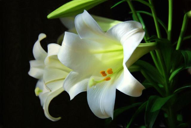 easter-lilies.jpg