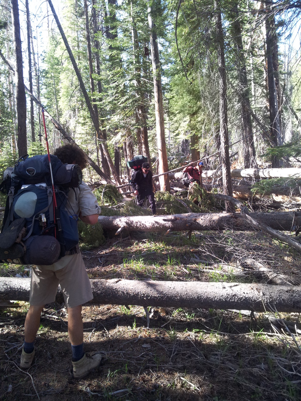 A picture showing how many fallen trees we had to climb over