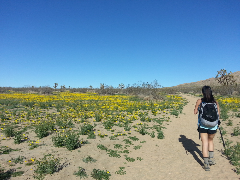 The soft dirt trail with fields of yellow flowers on either side