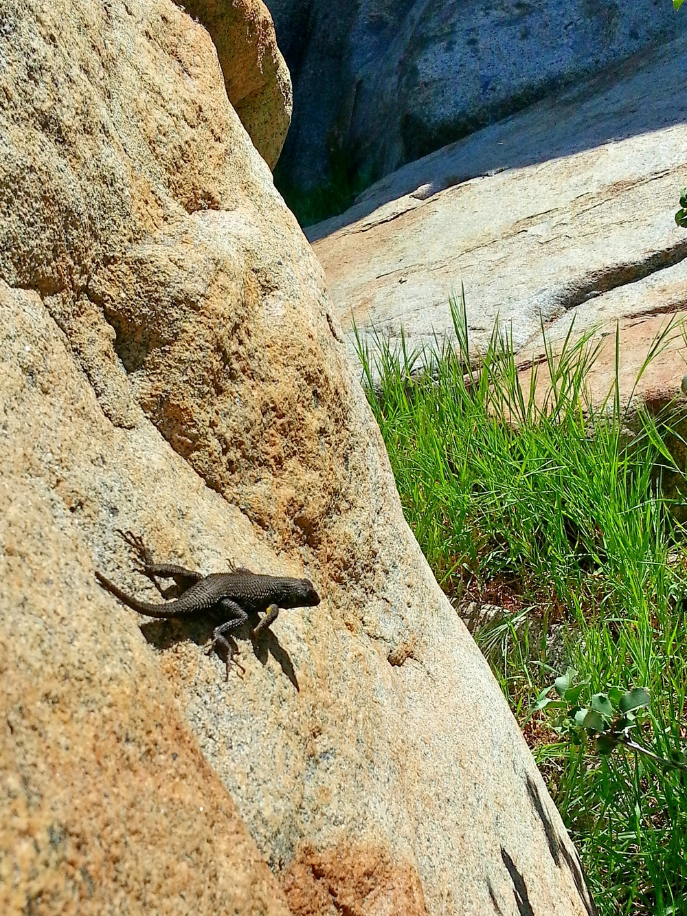 Not much wildlife except some hawks and lots of these lizards