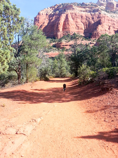 Hiking Devil's Bridge in Sedona
