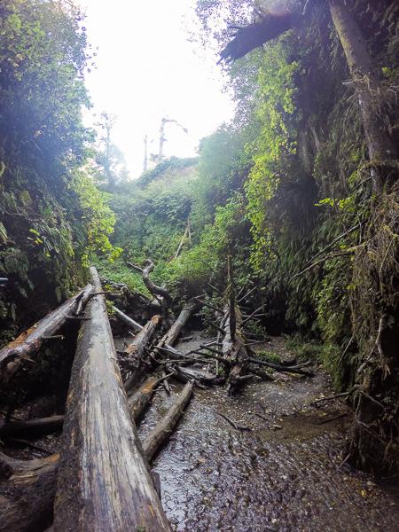 The large log jam