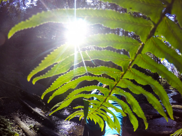8 different species of fern - a fern lover's paradise