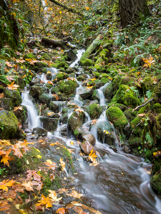 Trailside Cascades