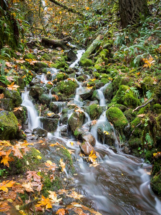 Trailside Cascades