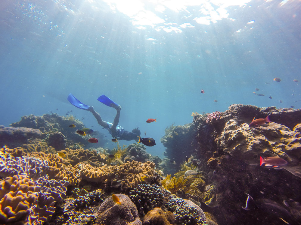 Our divemaster checking out particular reef feature