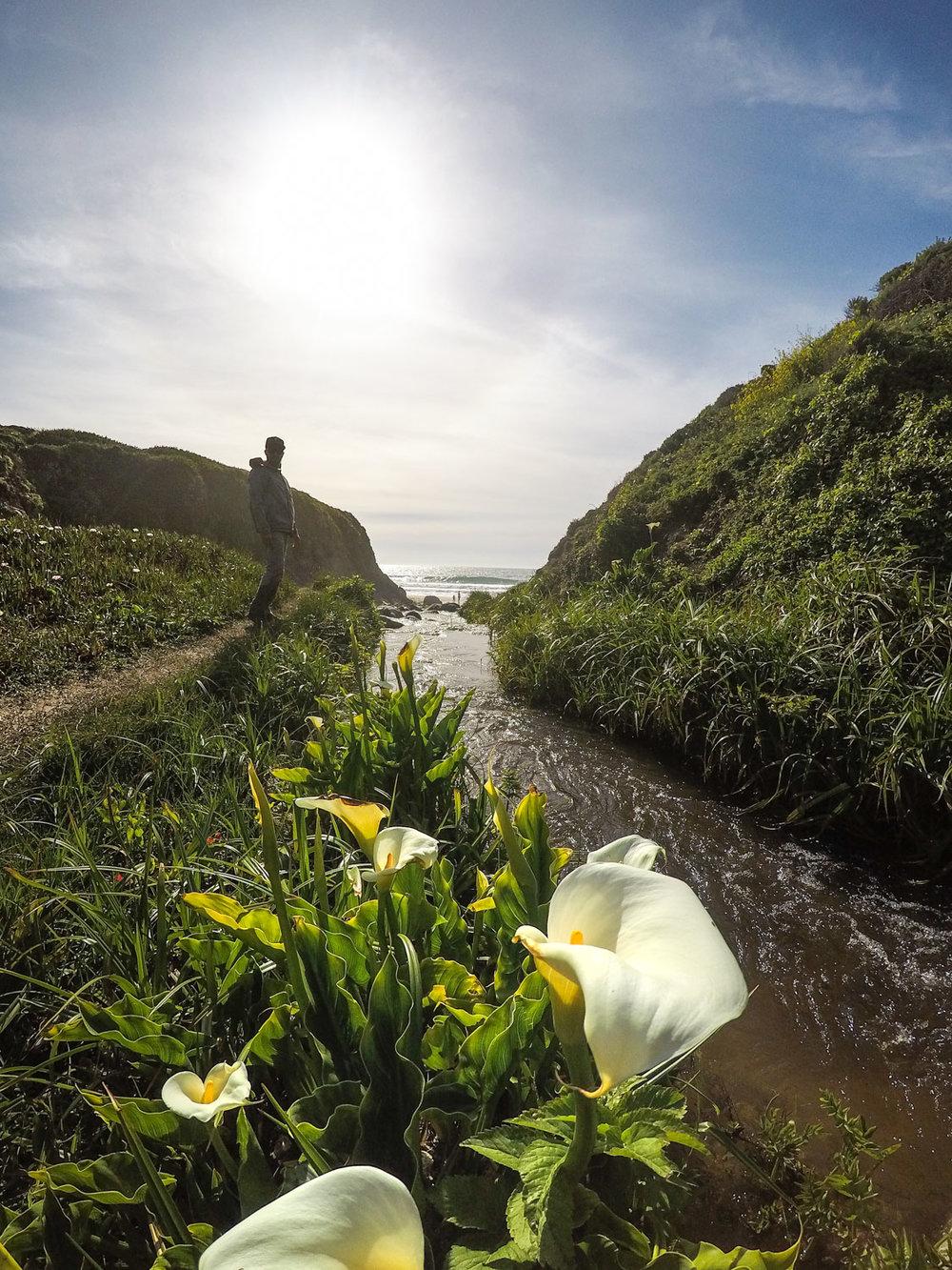The coastal California version of wildflowers!