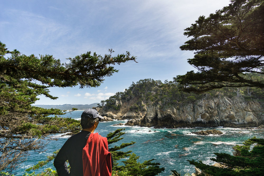 You can see the density of Monterey Cypress in Point Lobos - they grow right up to the edge of the cliff