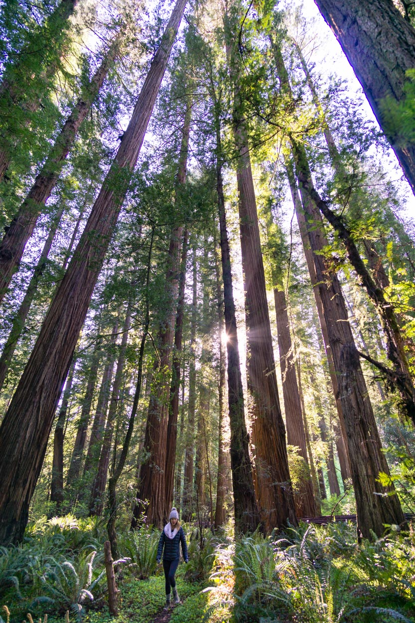 favorite-redwood-norcal-hikes.jpg