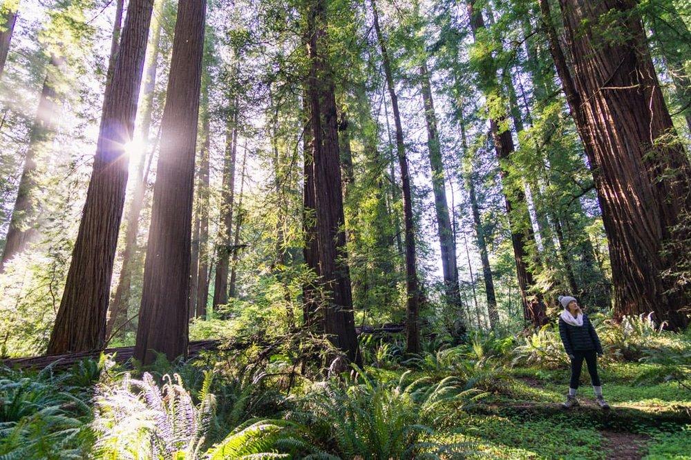 jedediah-smith-redwoods-california-road-trip.jpg