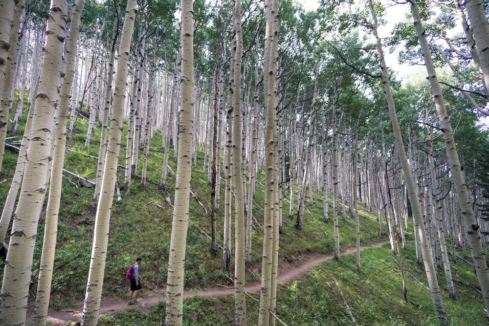best-day-hikes-flagstaff.jpg