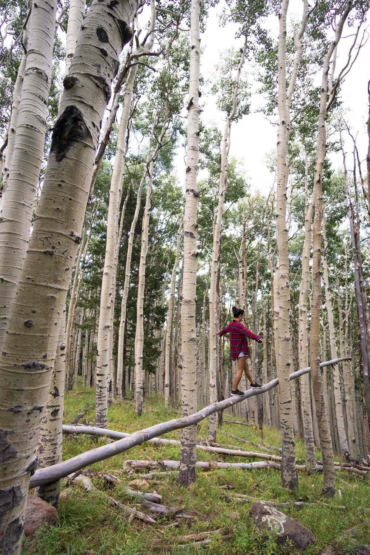 aspen-forest-grove-hikes-az.jpg