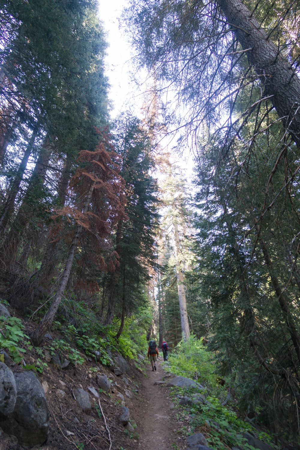 Backpacking through Sequoia National Park