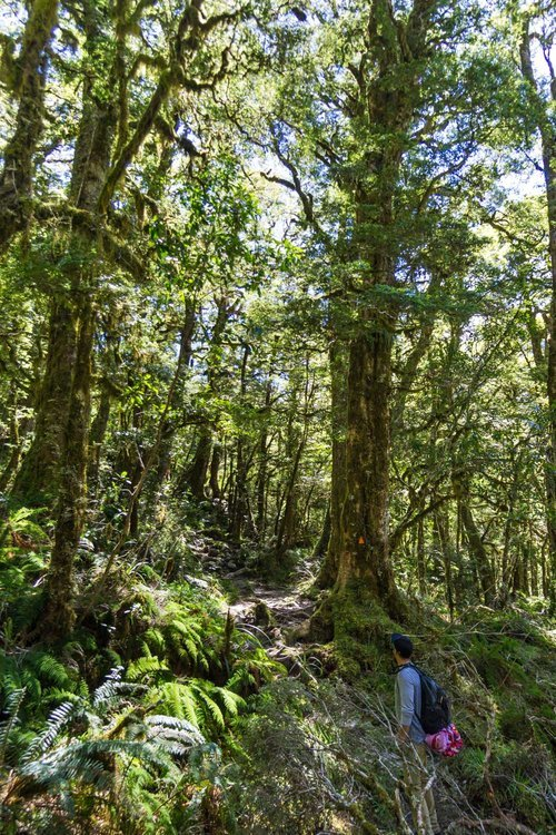 Favorite short hikes in fiordland national park