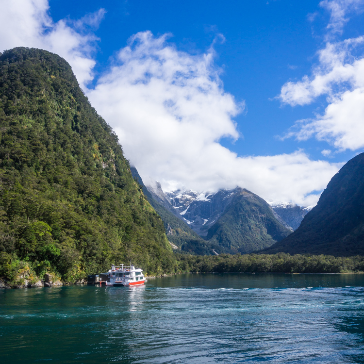 Milford sound cruise was a highlight of our trip