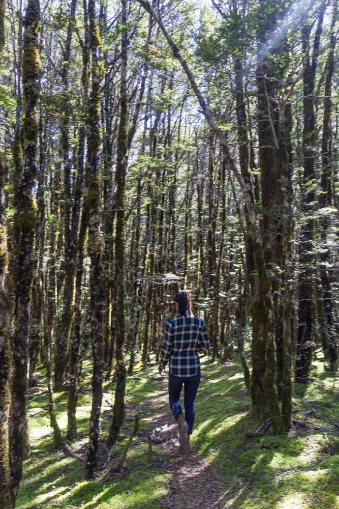 arthurs pass favorite hikes