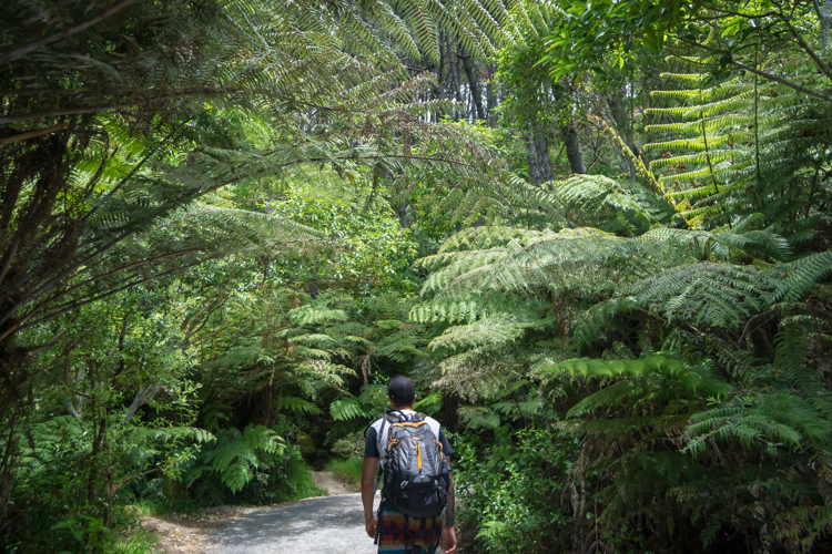 hiking-to-cathedral-cove-arch-new-zealand.jpg