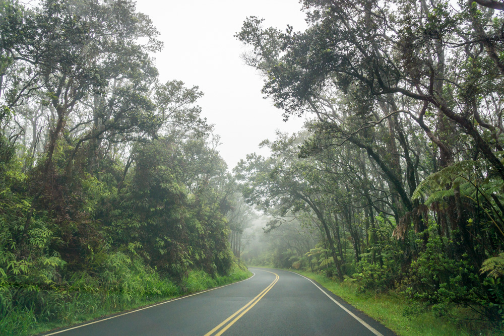 Misty, foggy, forest roads