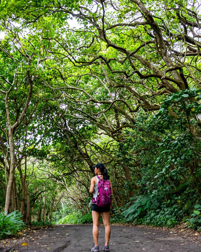 favorite big island hikes