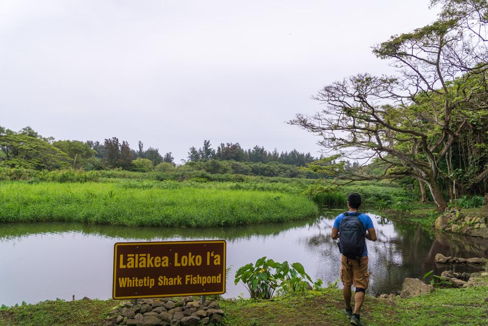waipio valley hike big island