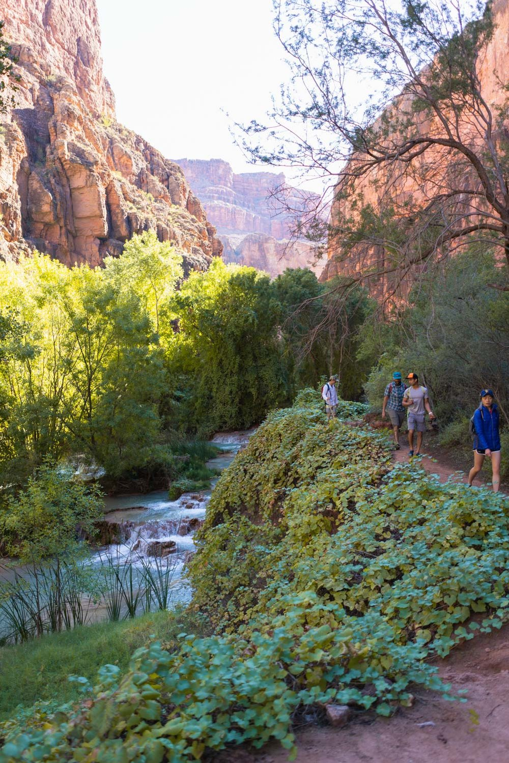 easy hikes following havasu creek