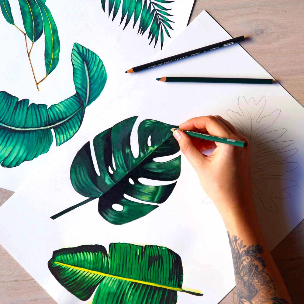 Plant Illustrations for  Design Studio X (@designstudio_x)