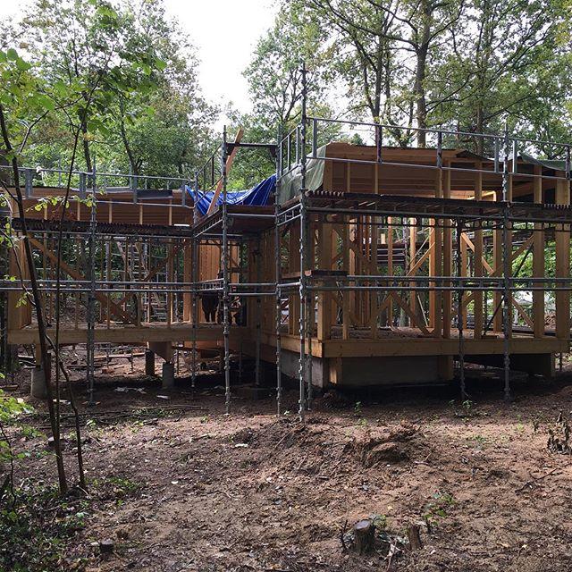 Lilla huset i stora skogen tar form.