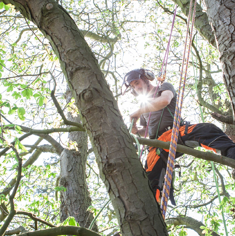 Tree Tek Climb.jpg