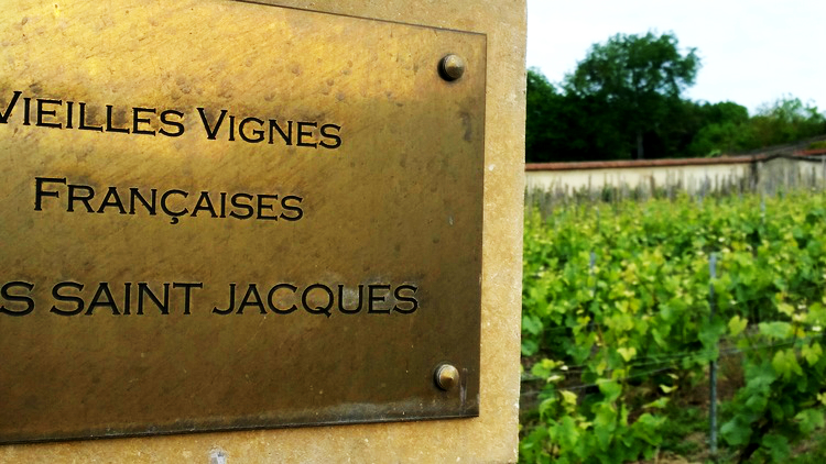 The legendary vineyard Clos Saint Jacques