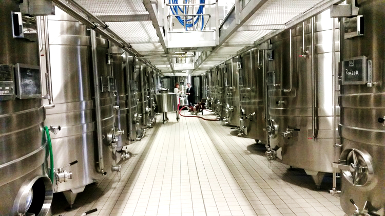 white wine production.jpg